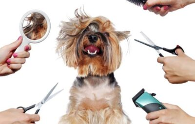 Why people are moving toward low-cost pet grooming in Bangalore faster?