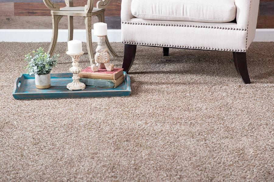 Measures to getting Rid of Carpet Beetles